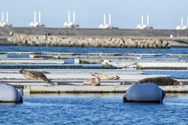 Seals on the Oosterscheldekering storm surge barrier. Photo: Holland.com