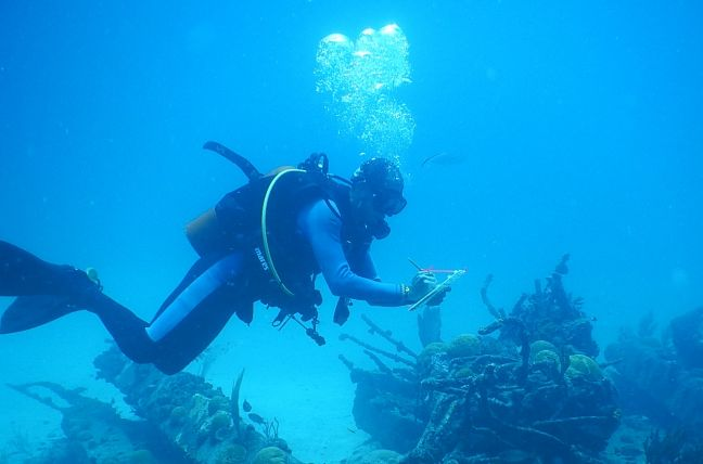 A researcher checking out coral bleaching off the coast of Sint Maarten. (Nature Foundation File Photo)