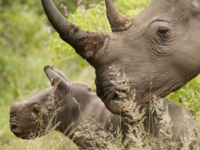 Central Africa's iconic mammals threatened by poachers, armed groups – UN environment wing