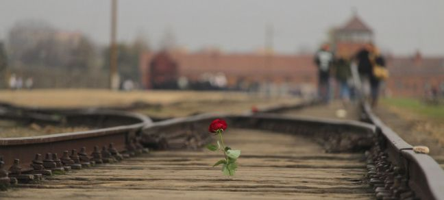 Unsplash/Albert Laurence A rose placed on the railway tracks at the Memorial and Museum Auschwitz-Birkenau, Poland.