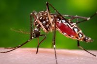 Communities reminded to prevent mosquito breeding sites after weekend of heavy rainfall