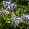Get Free Native Plants for Your Backyard at Amuseum Naturalis