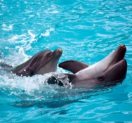 Ministry tells Dolfinarium to make improvements, put education central